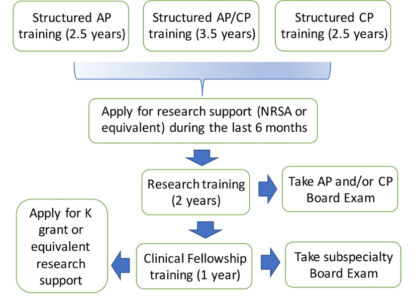 Pathology physician scientist training program pstp department to meet each candidates clinical and research goals pstp trainees fulfill all abp eligibility requirements for ap cp or apcp certification 1betcityfo Choice Image